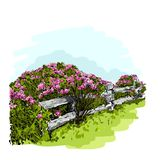 Vector illustration of a rose Bush behind a fence, watercolor vector illustration