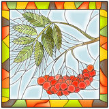 Vector illustration of rowan branch with berries. Stock Image