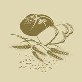 Vector illustration of rye bread, toast bread and cereals. Hand-drawn Vector illustration of rye bread, toast bread and ears of wheat Stock Images