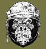 Vector illustration of 70`s Gorilla  / Monkey Soldier Stock Image