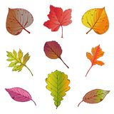 Vector Illustration, Satz hellen Herbstlaub auf weißem Hintergrund lizenzfreie abbildung