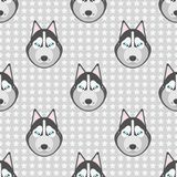 Seamless backgound. Pattern with dogs husky and stars on gray. Royalty Free Stock Photo