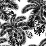 Vector illustration Seamless black and white palm leaves and fru Stock Image