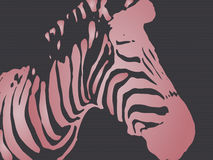 Vector illustration of seamless colorful zebra, Stock Photos