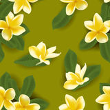 Vector illustration of seamless pattern with frangipani Royalty Free Stock Image