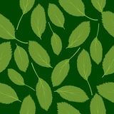 Vector illustration seamless pattern green leaves Stock Images
