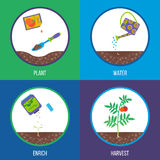 Vector illustration. From seed to tomato plant, stages. royalty free illustration