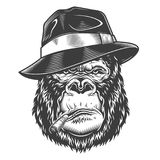 Head of gorilla. Vector illustration, serios gorilla head in fedora hat with cigarette on a white background Royalty Free Stock Photos