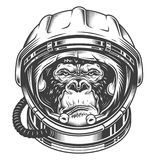 Head of gorilla. Vector illustration, serious gorilla head in the astronaut helmet on a white background Royalty Free Stock Image