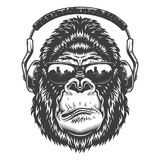 Head of gorilla. Vector illustration, serious gorilla head in the headphones and glasses on a white background Royalty Free Stock Photos