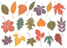 Vector illustration set of 19 autumn leaves. royalty free illustration