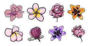 Vector Illustration set of beautiful flowers magnolia, plumeria, roses, loreto Lilium asiatic drawing spring flowers isolated on royalty free illustration