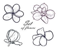 Vector Illustration set of beautiful magnolia and plumeria, drawing spring flowers isolated on white background stock illustration