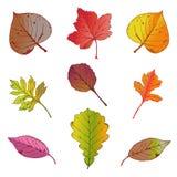 Vector illustration, set of bright autumn leaves on white background. Autumn leaves set. Vector illustration royalty free illustration