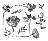 Vector illustration with set of Clematis, Anemone, Oxypetalum coeruleum, Hybrid tea rose, branches and leaves drawn by hand