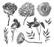 Vector illustration with set of Clematis, Pion-shaped rose, Hybrid tea rose, Hydrangea, branches and leaves drawn by hand