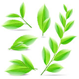 Vector illustration set of a collage of green tea Stock Images
