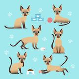 Vector illustration set of cute cat in different poses. Eating, sleeping, sitting and playing kitten in flat cartoon stock illustration