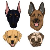 Vector illustration set of dogs flat icons. Cartoon and realistic in brown, black and sand colours isolated on white background. stock illustration