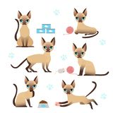 Vector illustration set of cute kitten in various poses with cat paw prints on white background. Collection of cat in vector illustration