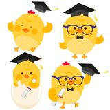 Cute chicken students with graduation hats. Stock Photo