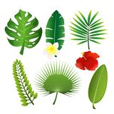 Vector illustration set of exotic tropical leaves and flowers. Colorful floral collection in flat cartoon style. vector illustration