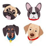 Vector illustration, set of funny head of purebred dogs, on a white background Stock Image
