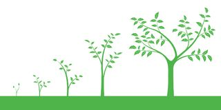Vector illustration of a set of green icons - plant or five grow. Th phase,  on white background Royalty Free Stock Photography