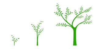 Vector illustration of a set of green icons - plant or tree grow. Th phase, isolated on white background Royalty Free Stock Photos