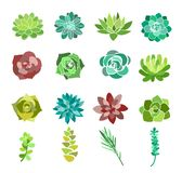 Vector illustration set of green succulent and cactus flowers. Desert plants top view isolated on white background stock illustration