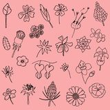 Vector illustration set of hand drawn flower leaf doodle as grap. Hic design floral elements Royalty Free Stock Photography