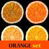 Vector Illustration set of Orange Fruits. Royalty Free Stock Image