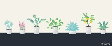 Set of Plants in pot.  Flat style vector illustration