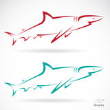Vector illustration of shark Stock Image
