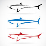 Vector illustration of shark banner Royalty Free Stock Photos