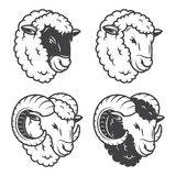 Vector illustration of 4 sheeps and rams heads. Monochrome, isolated on white background stock illustration