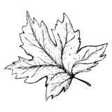 Vector illustration. Sheet black and white hand-drawn sketch. Line art royalty free illustration