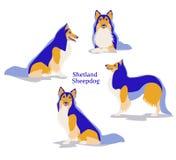 Vector illustration of Shetland Sheepdog or Shetland Collie in flat design. Vector illustration of Shetland Sheepdog or Shetland Collie in different poses Stock Images