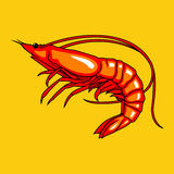 Vector illustration Shrimp royalty free stock photography