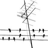 Vector illustration with silhouette of birds on wire and antenna Royalty Free Stock Photo