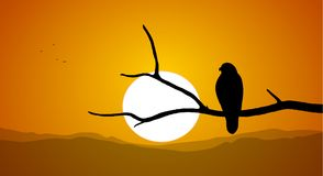 Silhouette of Buzzard sitting on a dry branch against the setting sun. Vector illustration: Silhouette of Buzzard sitting on a dry branch against the setting Stock Photo