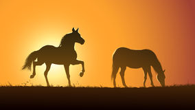 Vector illustration silhouette of grazing horses at sunset. Stock Photos