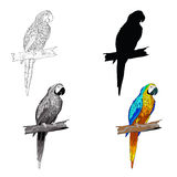 Vector illustration. Sitting on a branch parrot with turquoise wings. Black and white line, silhouette, black and white Royalty Free Stock Image
