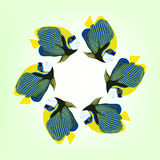 Vector illustration of six swimming fishes. Coral fish. Vector illustration of six swimming fishes. Emperor angelfish. Pomacanthus imperator fish. Coral fish Stock Photos