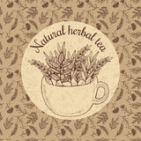 Vector illustration sketch card - craft herbal tea Stock Image