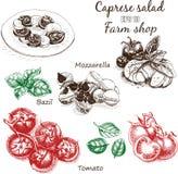 Vector illustration sketch - cheese, salad caprese. mozzarella, basil, tomato. Food card Stock Image