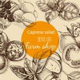 Vector illustration sketch - cheese, salad caprese. mozzarella, basil, tomato. Food card Stock Images
