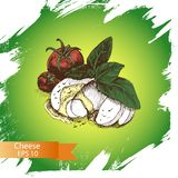 Vector illustration sketch - cheese, salad caprese. mozzarella, basil, tomato Royalty Free Stock Image