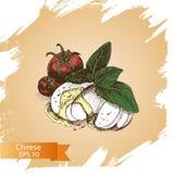 Vector illustration sketch - cheese, salad caprese. mozzarella, basil, tomato. Food card Stock Photography