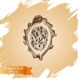 Vector illustration sketch - dragon fruit. Illustration - pitaya. Vector illustration sketch - dragon fruit. Illustration - pitaya card hand drawn Royalty Free Stock Photos